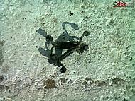 Vand set conducte injectoare rover 75 2 0cdt 2001` Dezmembrări auto în Urziceni, Ialomita Dezmembrari